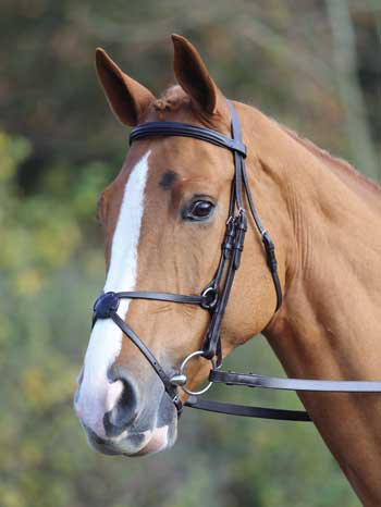 Aveimore Mexican Bridle
