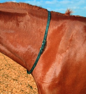 Shires Leather Neck Strap