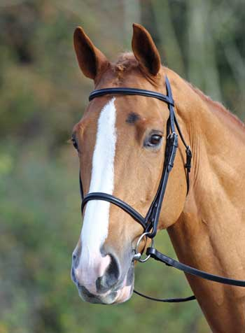 Aveimore Raised Cavesson Bridle