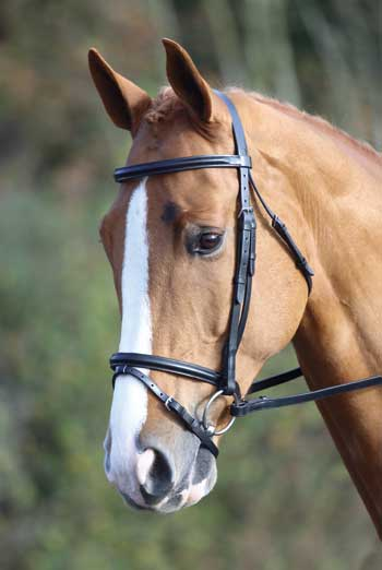 Aveimore Raised Flash Bridle
