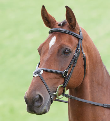 Sailsbury Brackle  Bridle