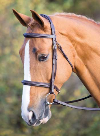 Sailsbury Fairford Bridle